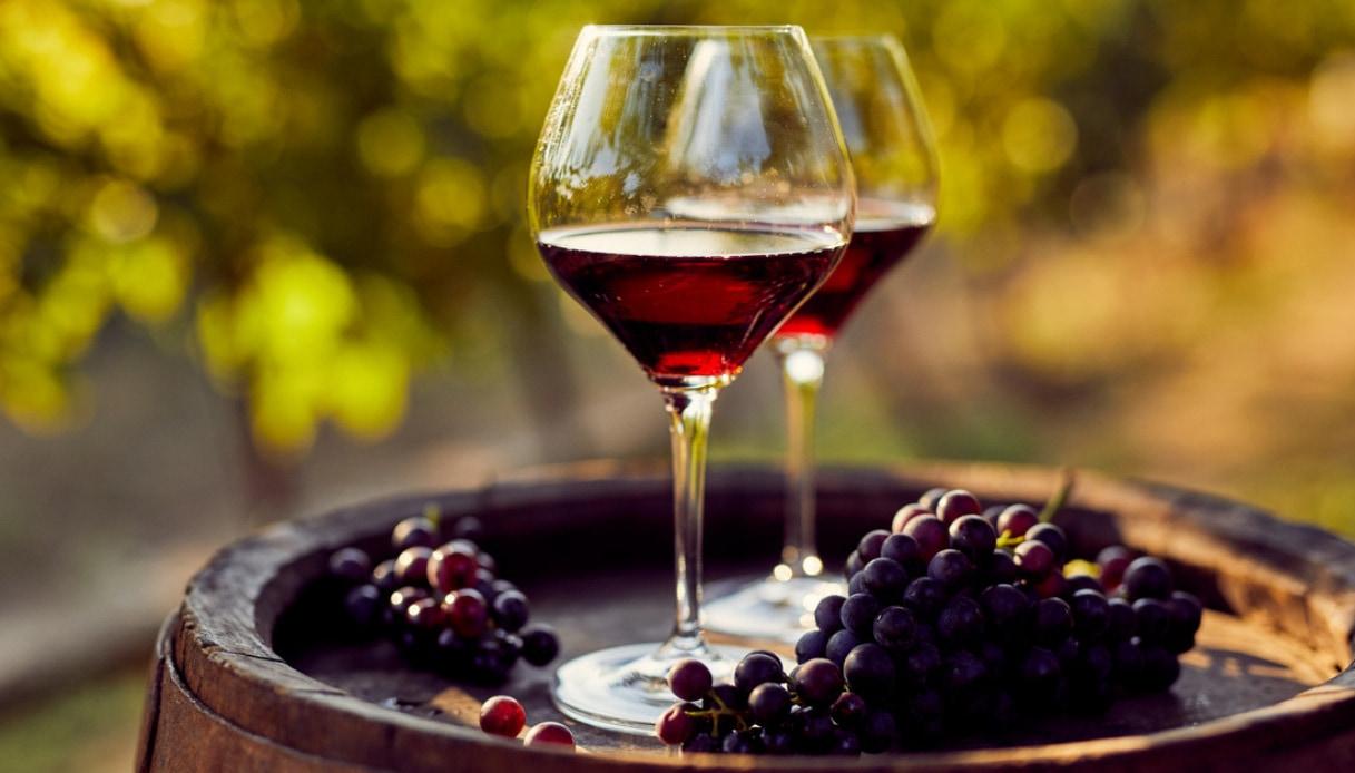 vinogrgrgrg.jpg